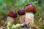 ...і сонний гриб в смарагдовій куфайці, дощу напився і за ніч підріс 2...Л. Костенко