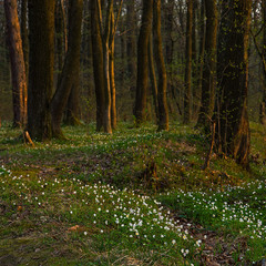 ...весняний ліс...