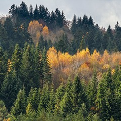...кусок осені із серця Бескид...