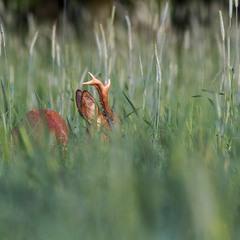 ...у травах літа...