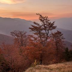 ...золота осінь із видом на гору Стримба...