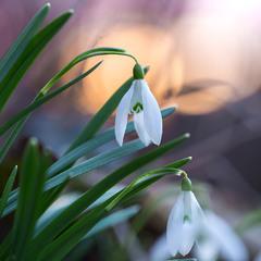 весняний мотив