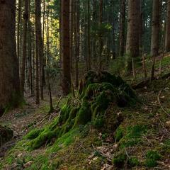 ...про життя лісу та в лісі...