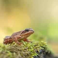 ...царівна на жаб'ячому троні...