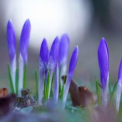 ...весна!!!...
