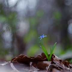 ...весна...кенон+геліос.. .такий світ...