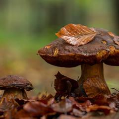 ...що то за осінь без грибів?...