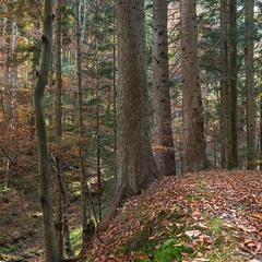 ...лісова осінь із Бескид...