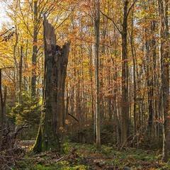 ...про: життя букового лісу...