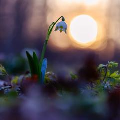 ...вечірнє сонце дякую за день...