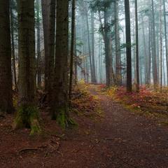 ...лісова осінь...