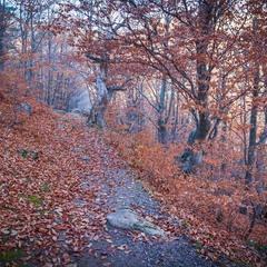 Золотые краски осеннего леса