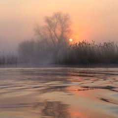В туманных поисках солнца