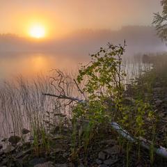 Туманный рассвет над речкой Кереть