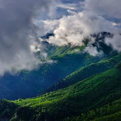 Вельвет Кавказских гор