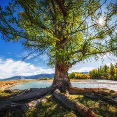 Осень на реке Чуя