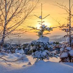 Снежный рассвет в Карпатах