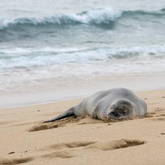 Море морем а сон по расписанию