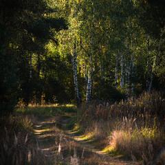 В лес...
