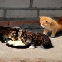 Эй, ребята, а что сегодня на обед..?