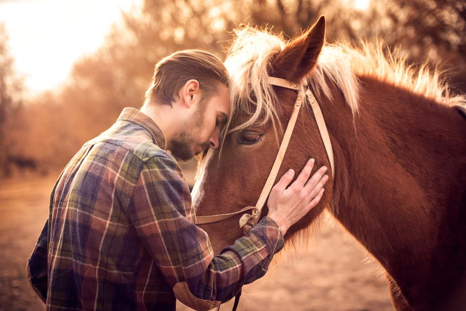 многие предположили, лошадь и человек фото картинки неправильное