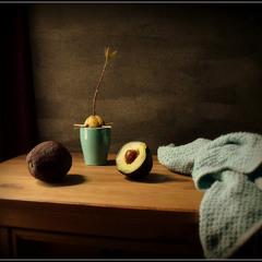 Проросток авокадо...