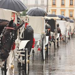 краківський дощ