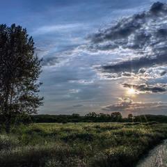 Древо, солнце и дороги...