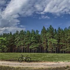 Путешествуя лесными дорогами