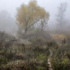 Ведущая в туманную осень...