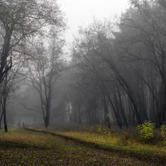 Среди туманного леса
