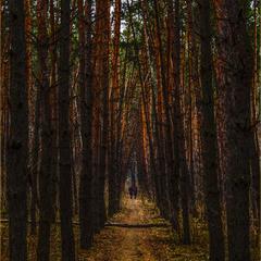 О прогулках в лесу
