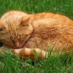 Тссс. Кіт спить