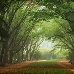 Осінь в Стрйиському парку