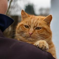 Быць с котом