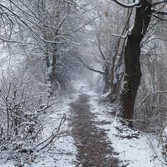 Зимова стежка