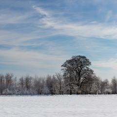 Простий зимовий пейзаж