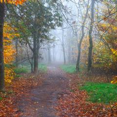 Дорога в осінь