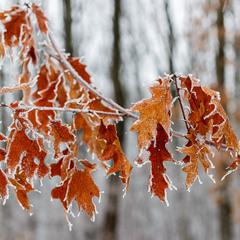 У зимовому лісі