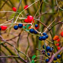 Осенняя бижутерия