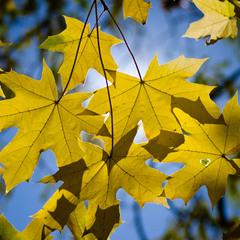 Майже осінь ...
