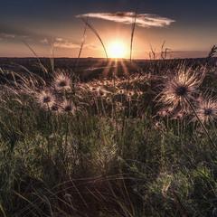 Волохаті примари у промінях сонця