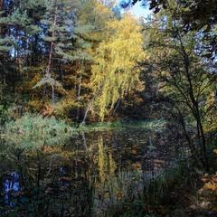 Таємниці осіннього лісу. ...