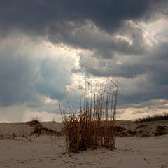 Вітер в небі за хмарами гониться.