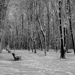 Деревья в зимнем серебре.