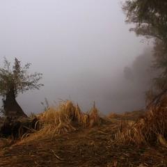 Осінній ранок виплива з туману…