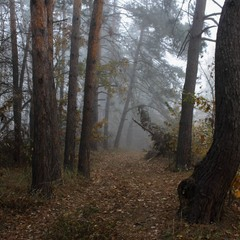 Ліс мовчав.
