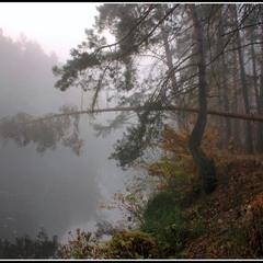 Осінній ліс – це королівство....