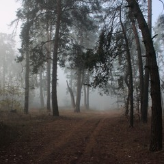 Осінній ліс, туманами повитий,.