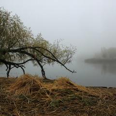 Вже зникли і птахи в сивому тумані.